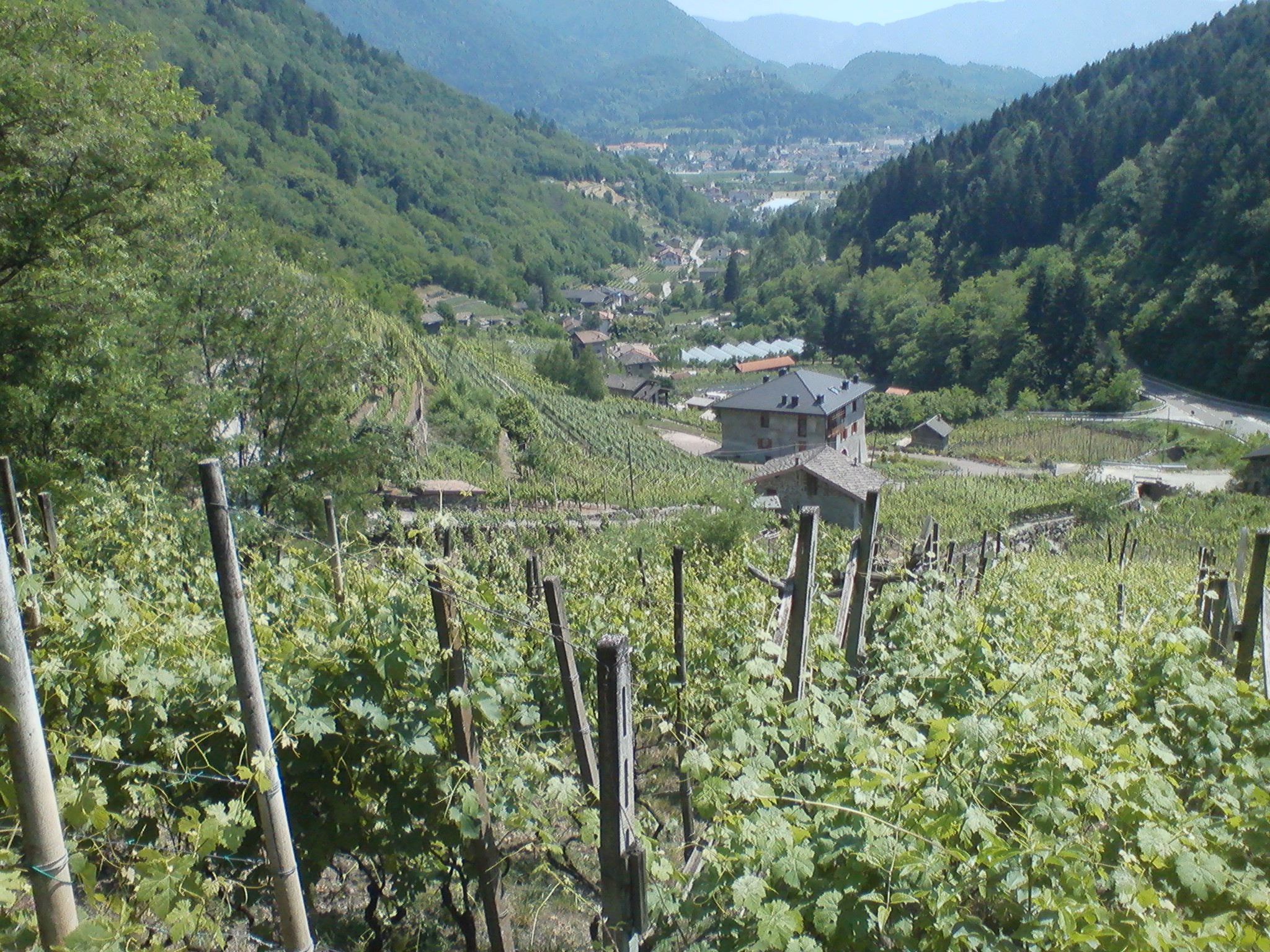 Pelz - Le vigne del Balasi.